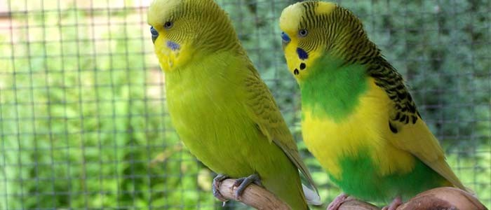 We created a  birds talk that bird owners could be proud of